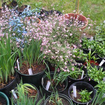 West Side Garden Club Spring Plant Sale – May 12 & 13, 2017