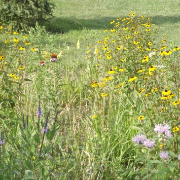 Neighborhood Butterfly Garden Update