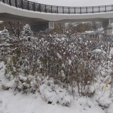 Fall Wrap-up in the Butterfly and Rain Gardens